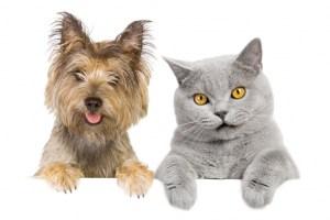 cat-dog-love-stkexpt