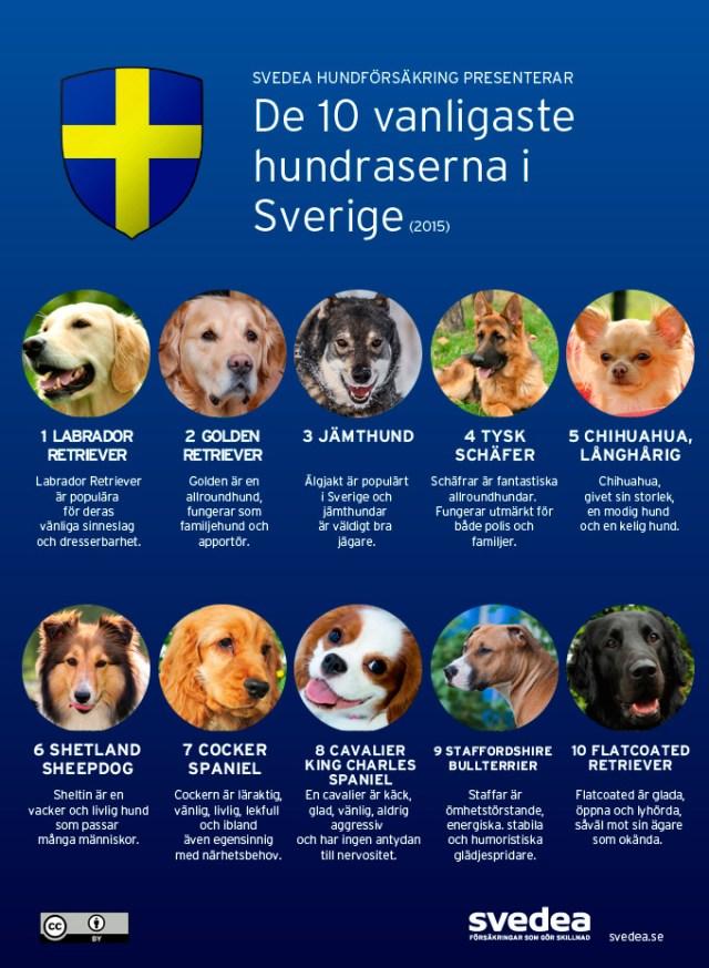 vanliga-hundar-sverige(1)