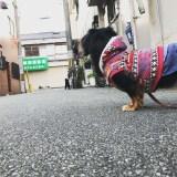 【犬のホンネ】散歩のときのあの行動の心理・気持ちまとめ