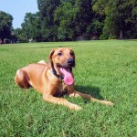 Mambo dog obedience training memphis