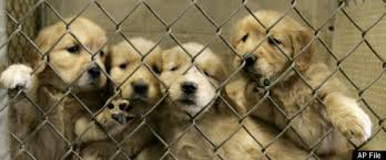 Is lancaster puppies a puppy mill? - Dog Obedience Training Guides