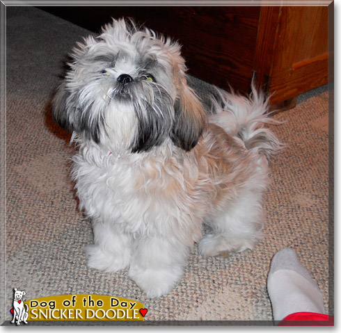 Snicker Doodle, the Dog of the Day