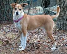 Twinkie is Betsy Kristl's dog.