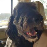 Baxter The Border Collie Poodle Mix Dogperday Cute Puppy Pictures Dog Photos Cute Videos Holistic Pet Care