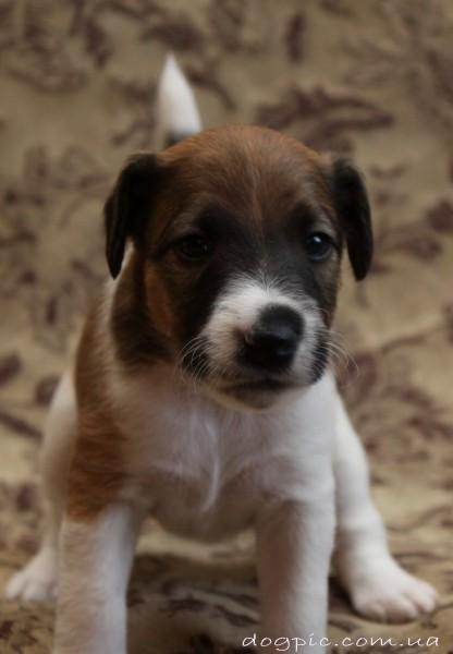 Июль, 2011   Собаки, прикольные фото собак и щенков ...