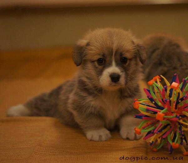 Собаки, прикольные фото собак и щенков. Красивые собаки ...