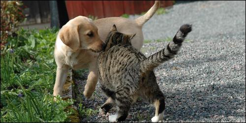 Dog Relations - Valpkurs