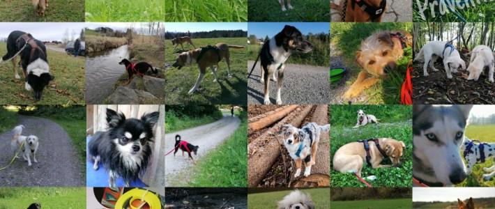 hundeschule buchenberg nadine waizenhöfer-kledwig dogs-human-friends