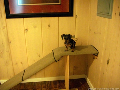 How To Build A Dog Ramp Yourself The Dog Guide