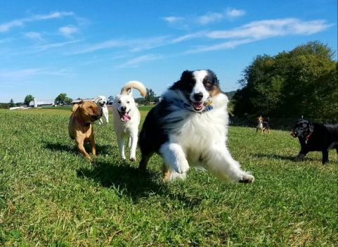 Dog S Day Pet Care Gaithersburg Md
