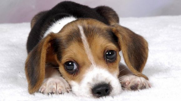 Training Your Puppy! Start with the Basics