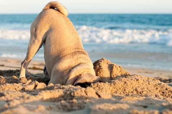 Dog Digging stop dogs from digging! Stop Dogs from Digging! dog digging 580x385
