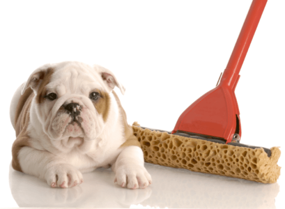 New Puppy Potty Training!