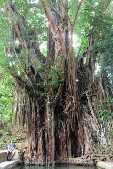 enchanted-bayete-tree-25