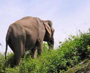 elephant-crossing-6