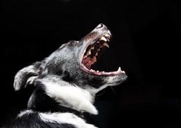Dog-Teeth-Healthy-Brush-Top-Ten-Tips-PlaqueOff