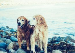 DogSolutions2