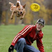 Australian Cattle Dog catching frisbee