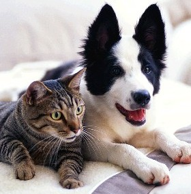 Stomax Dog and Cat