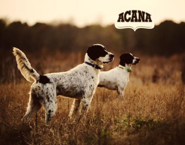 Acana Dog Food Setters