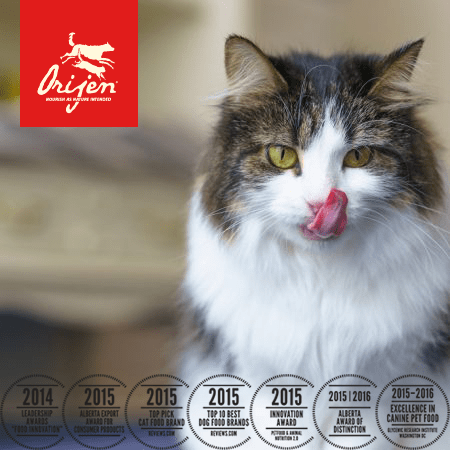 Orijen-Cat-Food-South-Africa-Dog-Solutions-Healthy-Organic-Appropriate-NAtural-Best
