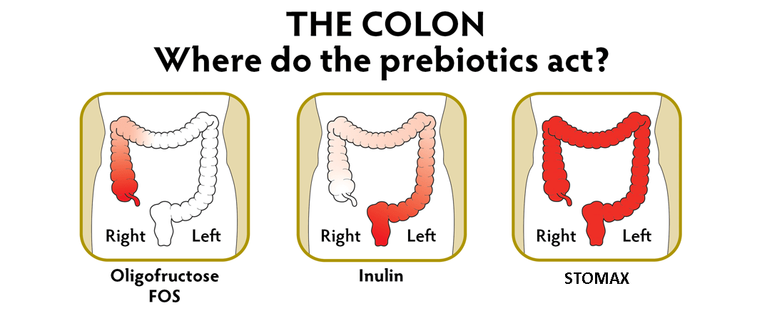 Where Prebiotics Work