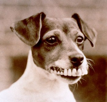 dog with human false teeth