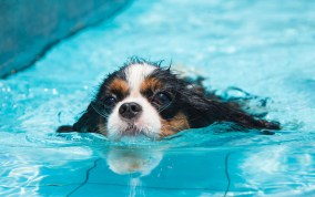 Hydrotherapy is a type of water therapy designed to increase a dog's strength and improve mobility.