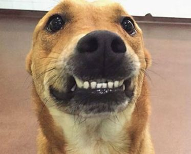 weary-smile-dog