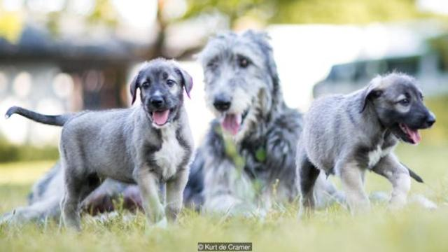 wolf-hound-mom-twins-article
