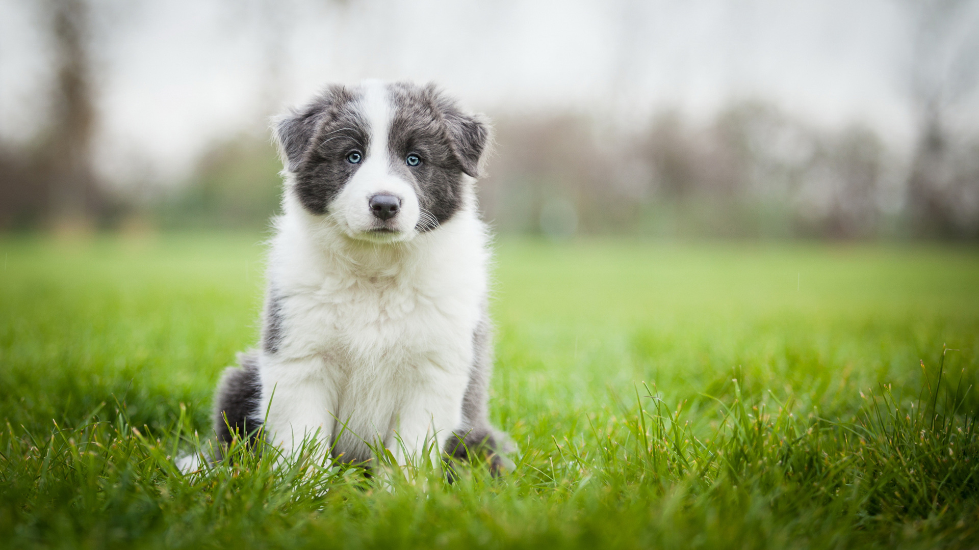 large breed puppy sitting on grass