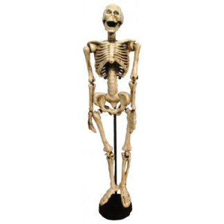 Cast Iron Articulated Skeleton
