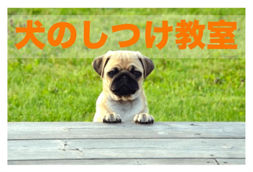 犬のしつけ教室 ドッグトレーナー