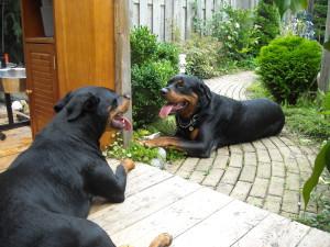 Diego en Daisy 006
