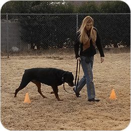 Brain Training For Dogs Review 4