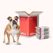 Dog with a box of Ollie dog food