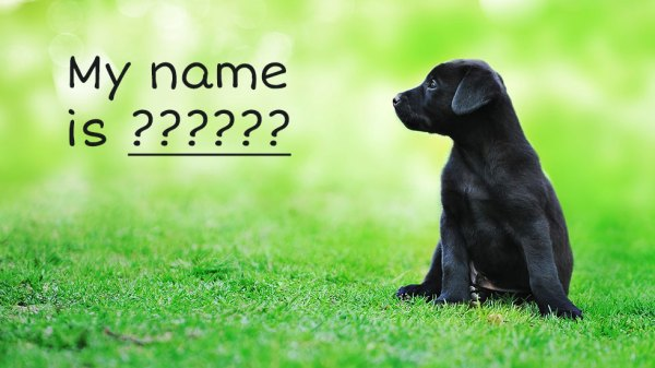 5 Cool Dog Names for Your New Puppy | Dog Tails