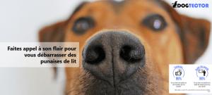 satisfaction détection canine des punaises de lit dogtector avis