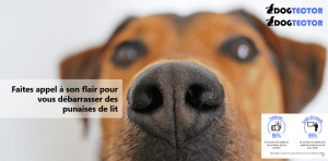 Dogtector logo et satisfaction