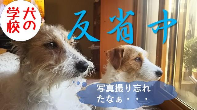8月19日犬の学校にお越しのお客様