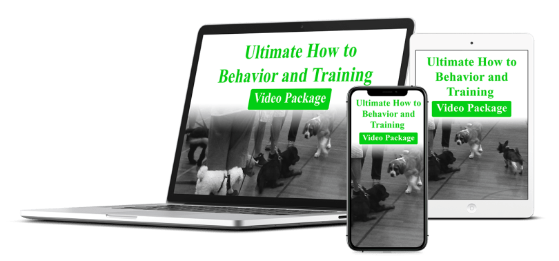 Behavior Videos Bundle