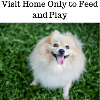 Home Visit Feed and Play