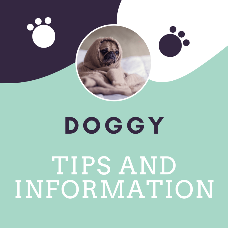 Copy of Tips and Information-1