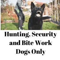 Hunting, Security and Bite Work Dogs Only