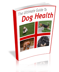 Home Remedy Guide For Dog Skin Problems