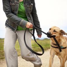 Common Dog Leash Training Problem