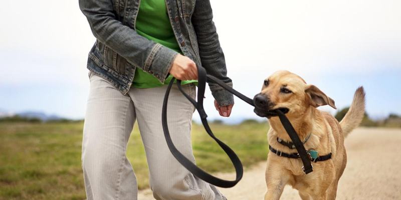 Common Dog Leash Training Problem