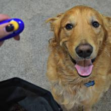 Tips About Dog Clicker Training