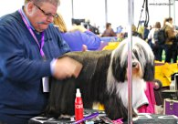 WKC Dog Show Breed Judging 7