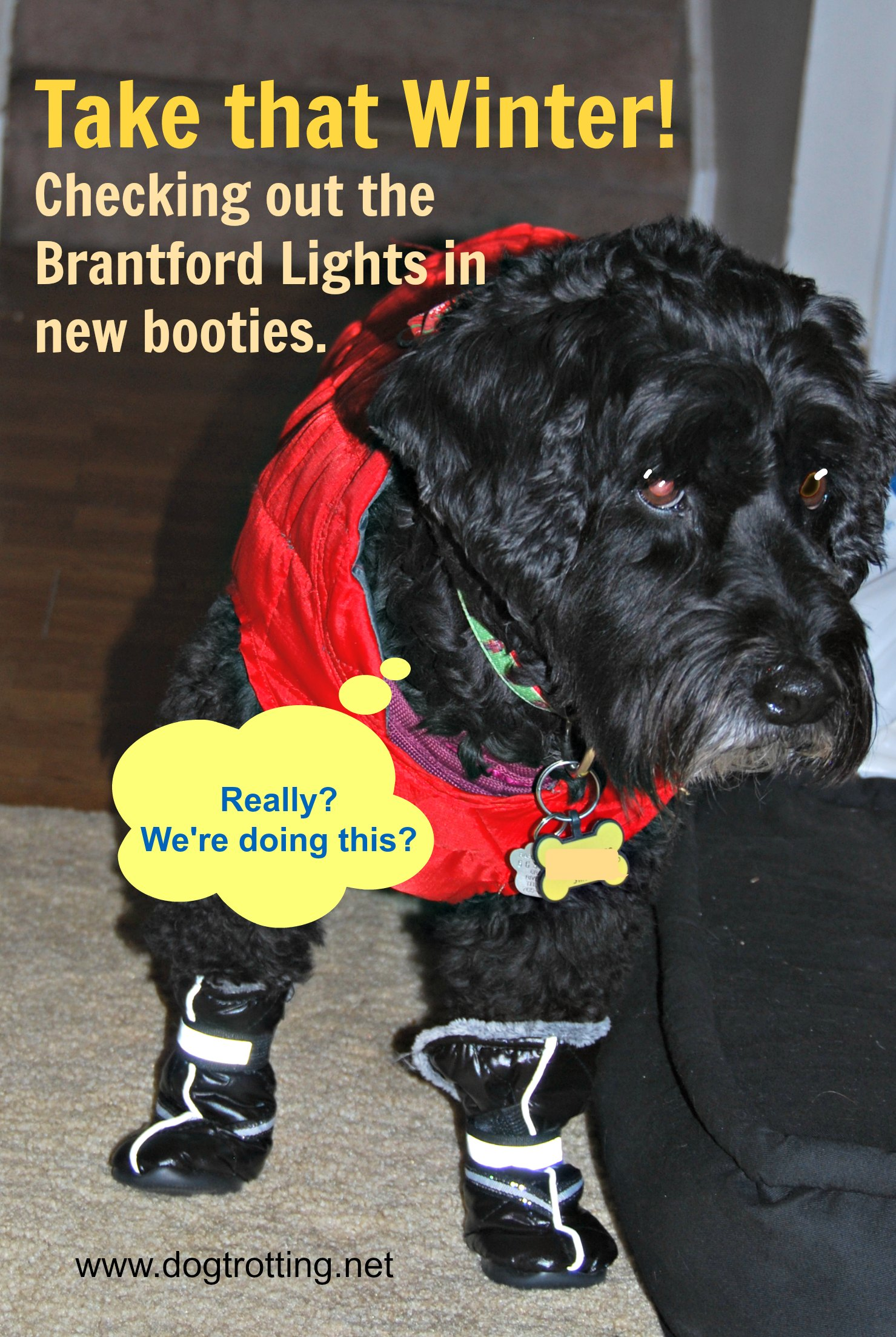 Travel Brant, ON: Pawing around at the Brantford Lights at Glenhyrst